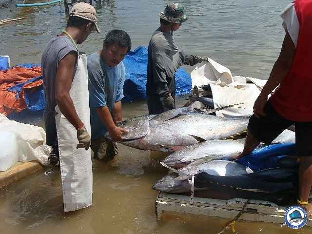 palawan Tuna Fishing 06.jpg