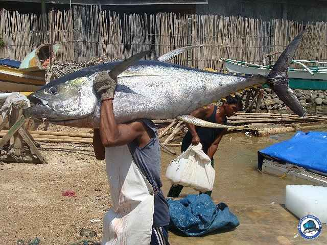 palawan Tuna Fishing 07.jpg