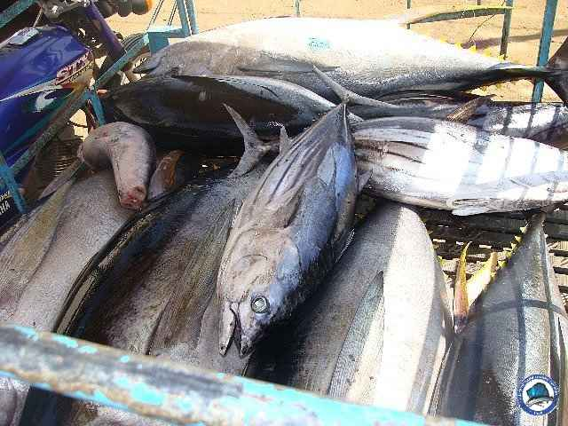 palawan Tuna Fishing 08.jpg
