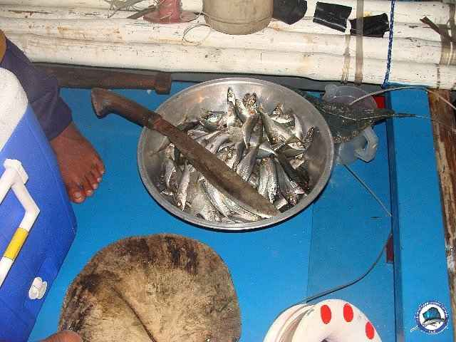 palawan Tuna Fishing 13.jpg