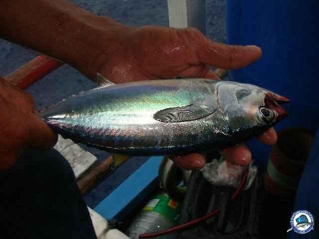 palawan Tuna Fishing 21.jpg