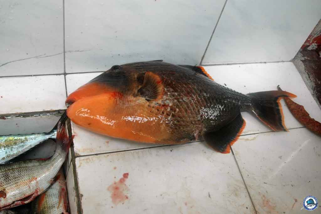 batangas Ambil fishing 020.jpg