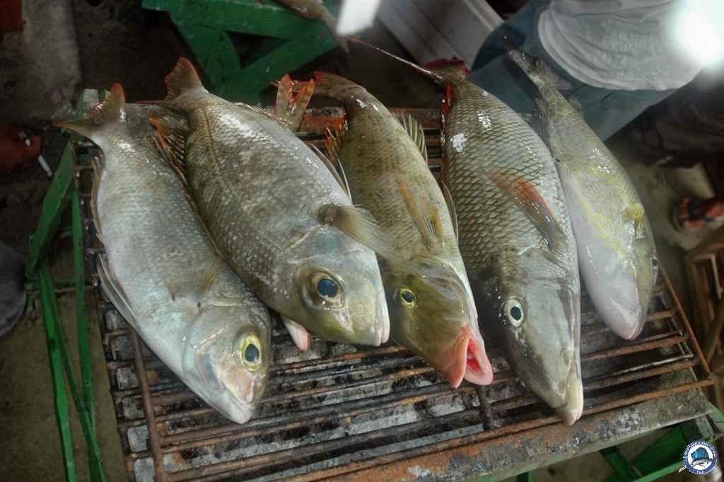 batangas Ambil fishing 021.jpg