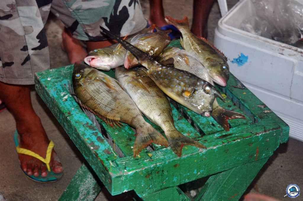 batangas Ambil fishing 022.jpg