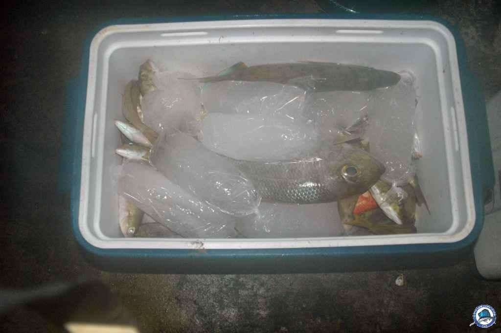 batangas Ambil fishing 029.jpg