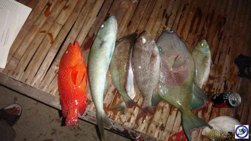 ambil batangas fishing 0010.jpg