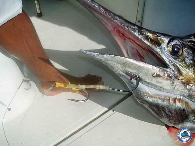 calayan island fishing 1010095.jpg