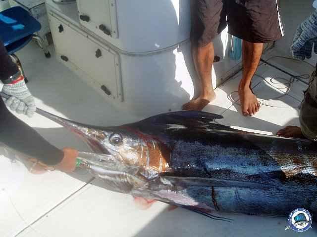 calayan island fishing 1010096.jpg