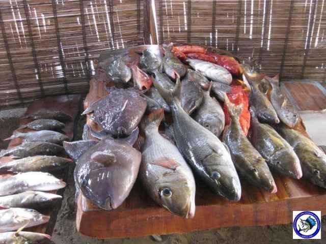 ambil batangas fishing_2297525_n.jpg