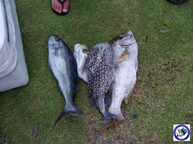 Ambil sportfishing-03.JPG