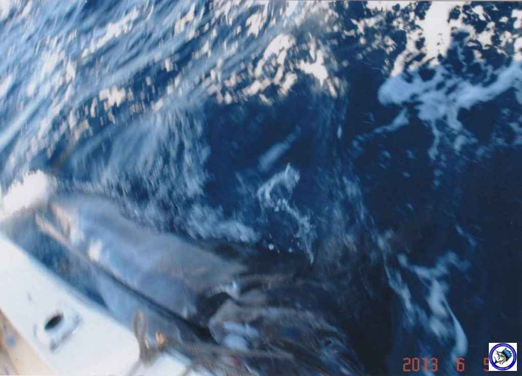 philippine black marlin 10.jpg