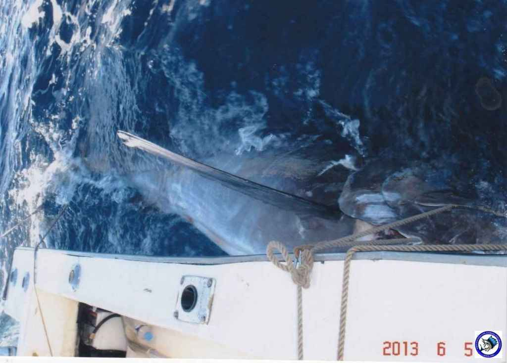 philippine black marlin 8.jpg