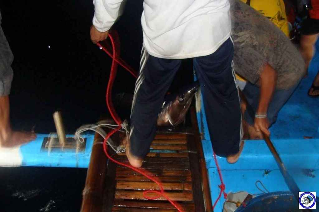 Palawan_Sport_Fishing_2013_06.JPG