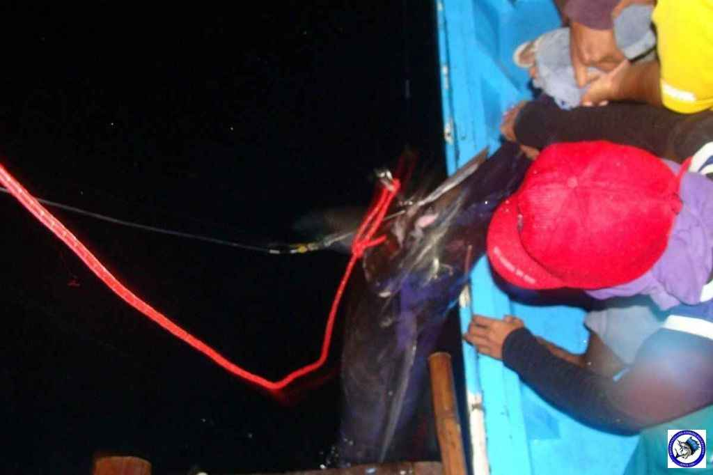 Palawan_Sport_Fishing_2013_08.JPG