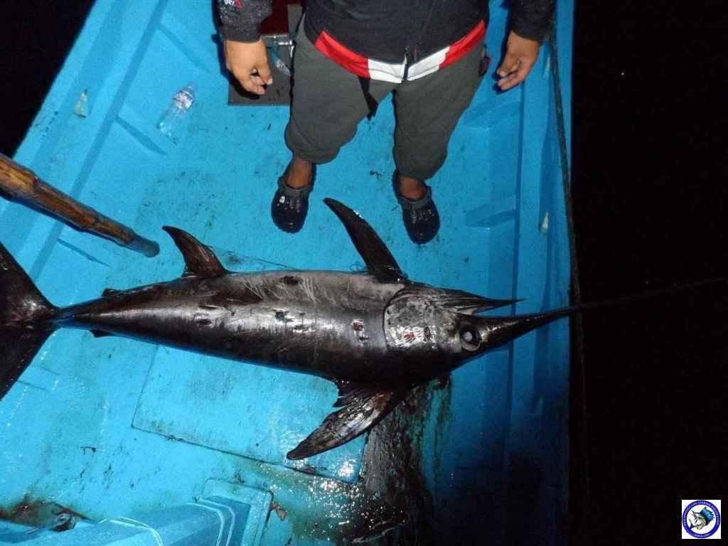 Palawan_Sport_Fishing_2013_10.JPG