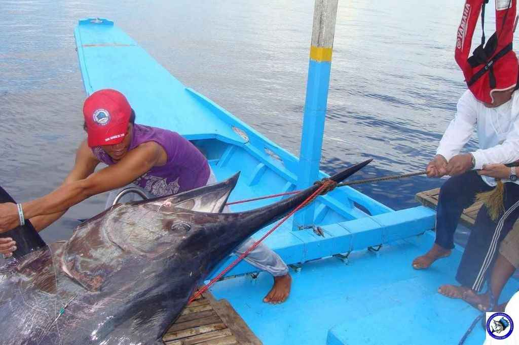 Philippine Sport Fishing 318kg Black Marlin08.JPG