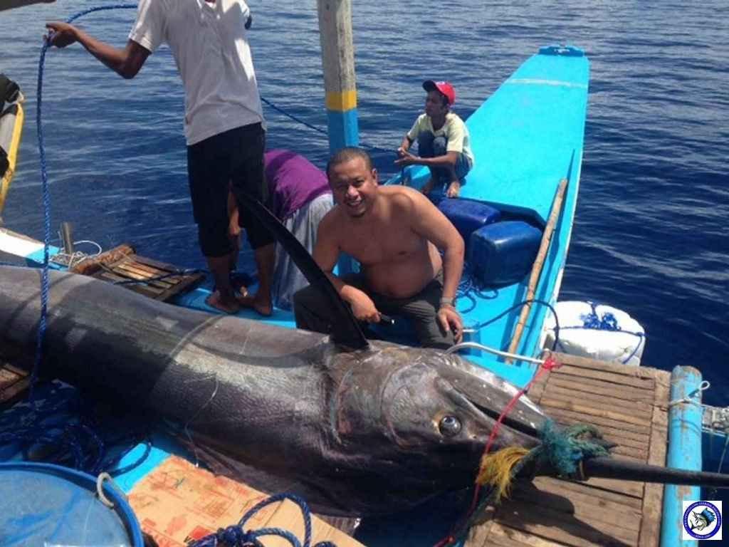 Philippine Sport Fishing 318kg Black Marlin09.jpeg