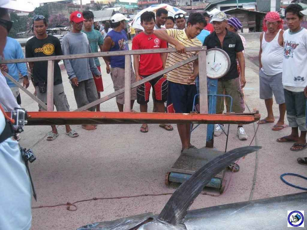 Philippine Sport Fishing 318kg Black Marlin16.JPG
