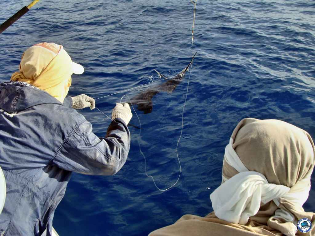 philippines international game fishing06765.jpg