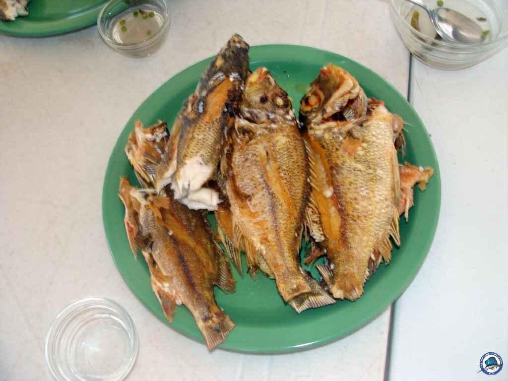philippine marlin trolling 5436.jpg