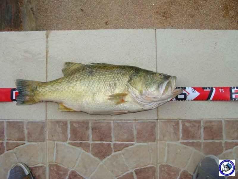 pantabangan bass fishing 02329.jpg
