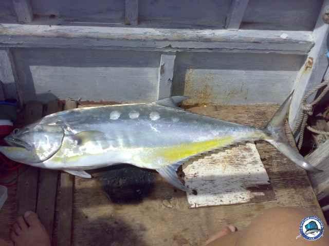 Queenfish-1.JPG